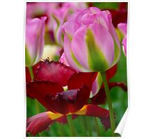 2 Tulips Poster