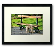Dog waiting in parc Framed Print