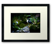 avian pride By Ken Killeen Framed Print