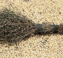 Handmade Broom on Beans by rhamm