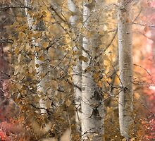 Misted by Beve Brown-Clark