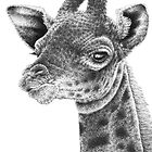 Giraffe Calf by Lorna Mulligan