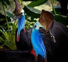 blue raptors By Ken Killeen by KenKilleen