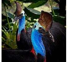 blue raptors By Ken Killeen Photographic Print