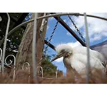 free cage By Ken Killeen  Photographic Print