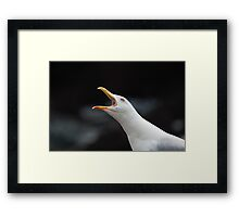 A Very Vocal Gull Framed Print