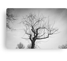 Monochrome Tree in Bridgewater Virginia Canvas Print