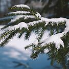 Tree with Snow in Bridgewater by Dfeivor