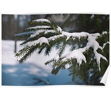 Tree with Snow in Bridgewater Poster