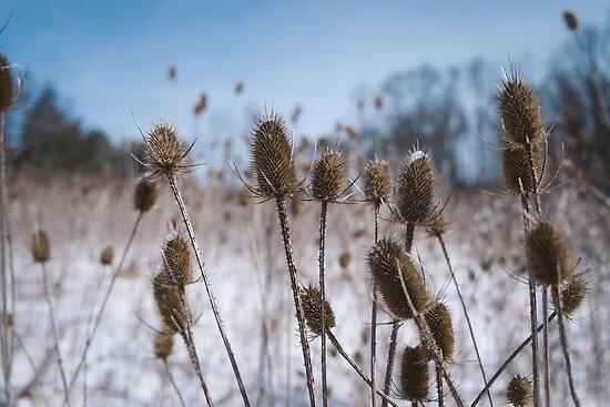Spiky Things in Snowy Field by Dfeivor