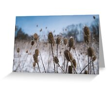 Spiky Things in Snowy Field Greeting Card
