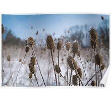 Spiky Things in Snowy Field Poster
