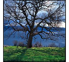 Leafless oak tree above the Mediteranian sea Photographic Print