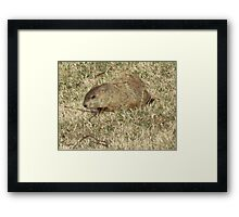 Groundhog days Framed Print