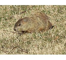 Groundhog days Photographic Print