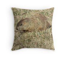 Groundhog days Throw Pillow