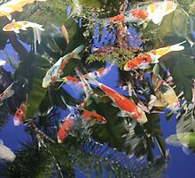 Koi In The Palms by Shilohlin Pfeiffer