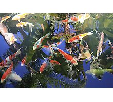 Koi In The Palms Photographic Print