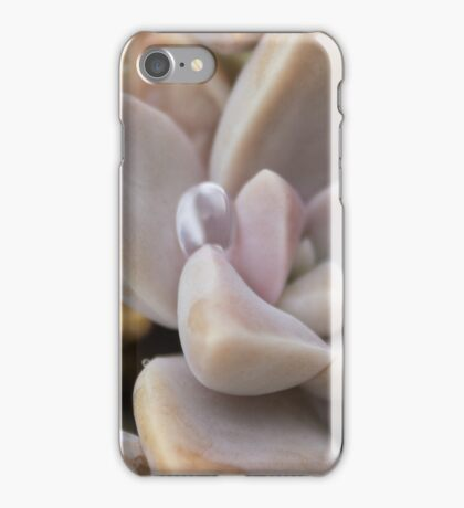 Flower Macro - Succulent plant with dew drop iPhone Case/Skin