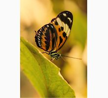 Small orange  butterfly on the leaf Classic T-Shirt