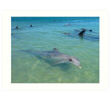 Dolphins Galore Art Print