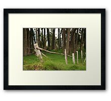 Barbed Wire Fence Among Trees Framed Print