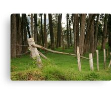 Barbed Wire Fence Among Trees Canvas Print