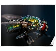Blow Fly Macro Poster