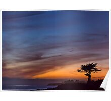 Cypress tree at sunset- Santa Cruz Poster
