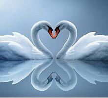 swan heart by opio9