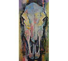 Horse Skull Photographic Print