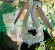 Pelicans Striking a Pose by Sandra Chung