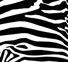 zebra by djohnson23