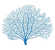 blue sea fan coral silhouette by beakraus