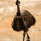Curious Emu by Elaine Teague