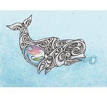 Beluga whale  Photographic Print