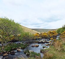 Dartmoor Stream by emyyewuk