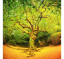 Golgotha Tree Photographic Print