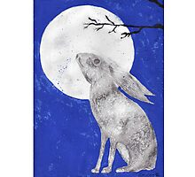 March Moon Gazing Hare Photographic Print