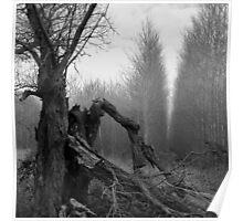 Old Man Tree Poster