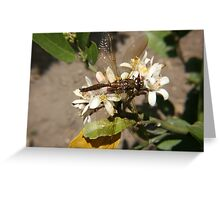 Dragonfly in a Garden Greeting Card