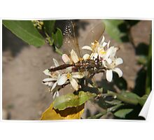 Dragonfly in a Garden Poster