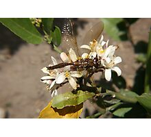 Dragonfly in a Garden Photographic Print