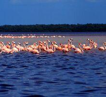 Celestun Flamingos by Eva Kato