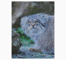 Pallas's cat (Otocolobus manul) Kids Tee