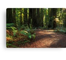 A Path In The Redwoods Canvas Print