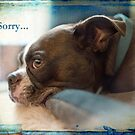 Sorry... by Susan Werby