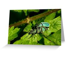 Green Nettle Weevil Greeting Card