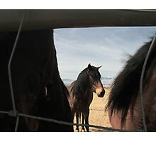 Fenced In and Hanging Back Photographic Print