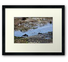 Crabs at the Beach Framed Print